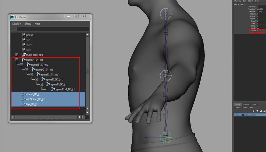 Maya rigging_Introduction to rigging a human torso_03