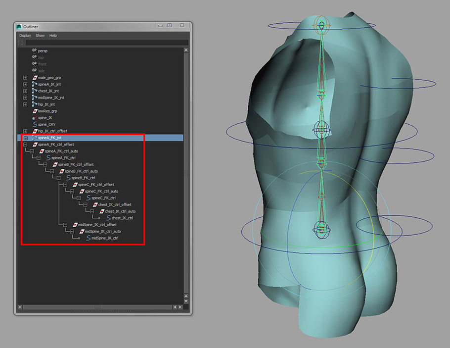 Maya rigging_Introduction to rigging a human torso_10